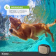 Kippy Evo, Le Nouveau GPS and activité pour Chiens et Chats, 38 GR, Waterproof, durée 10 Jours, Pink Petal